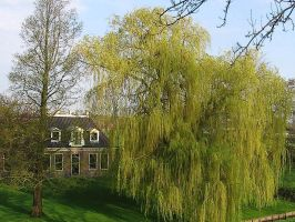 bigger than a house by schaduwvacht