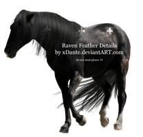 Raven Feather Details by xDante