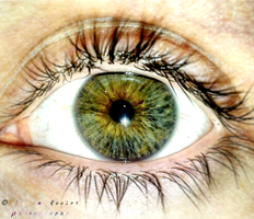 Brown and Green Iris by FrozenLauraCLC