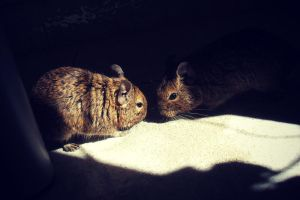 degus by aPurringCat