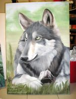 Adolescent wolf in oils by blayrd