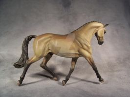 Buckskin warmblood stallion by ymagier
