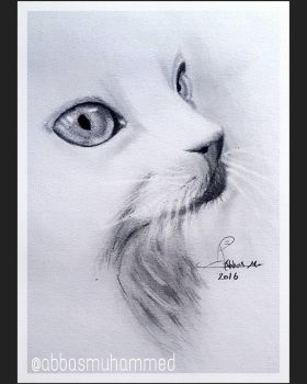 cat  by abbasmuhammed