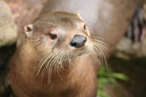 Toronto the Otter III by rbryant
