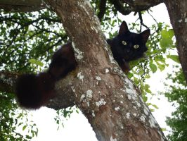 Black Cat in a Tree 3 by K1ku-Stock