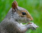 Up Close with a Squirrel by WilliamJCovello