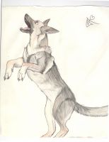german shepard by Incyray