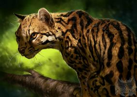 Catamancer Ocelot by TamberElla