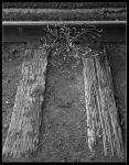 Track and Weed by mymamiya