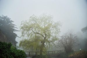 Foggy Willow by EarthHart