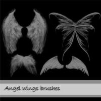 angel wings by avgust