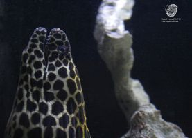 A Spotted Eel 1 by leopardwolf