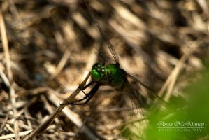 Green Dragonfly by Annushkka