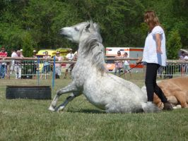 DAPPLE GREY PONY STOCK 006 by CinderGhostStock