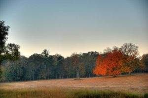 Fall In The South by Raysperspective
