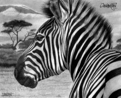 Zebra by dangaranart