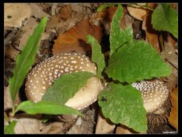 Insects on Mushrooms by Saphirot