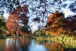 Kew Palm House Lake Swamp Cypresses At Sunset by aegiandyad