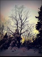 Dusk in Winter by surrealistic-gloom