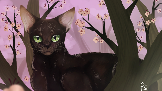 Hollyleaf cherry blossoms redraw edit by leafdawgs