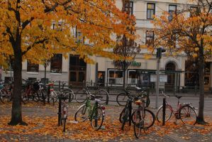 Yellow autumn leaves by ProjektGoteborg
