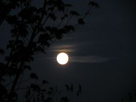 Supermoon II by dmguthery
