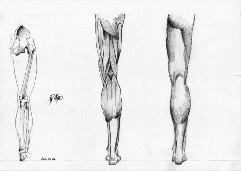 Leg Study back view by WeAreMeHUh