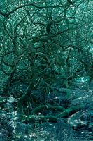 Tangled Underbrush by runique