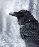 Winter Raven by kenket