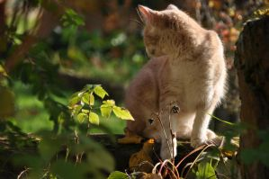 cat in autumn by instant-noodle00