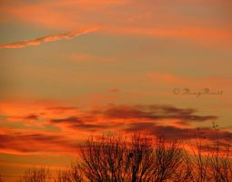 Orange in the Evening by Michies-Photographyy