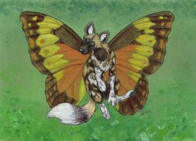 African Wild Dog Butterfly by sidian