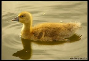 Dreaming goose baby by nothingofvalue