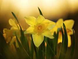 Narcissus by realityDream