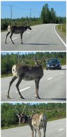 Oh deer... by Wolverica