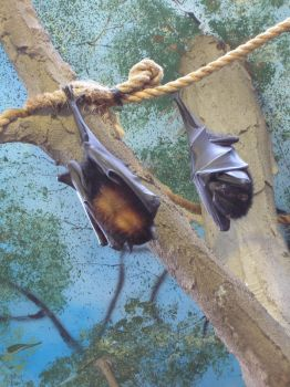 Hanging Bats by DustedRose