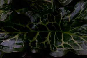 Leaf / Snake Skin Texture by CNStock