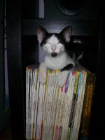 my geeky cat Bandito by MormouFeggakri