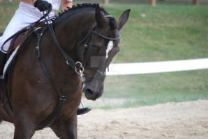 Show Jumping 65 by BluegrassEquineStock