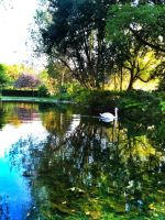 Swan Pond by ricey-art