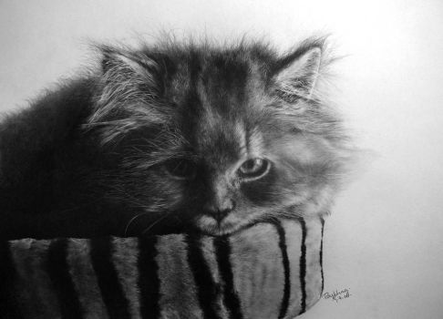 my 9th pcs of cat drawing by paullung