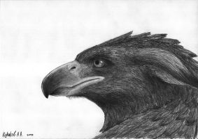 09.12 griffin's head 3 by axe-ql