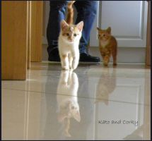 Corky and his brother Kato by Buble