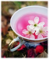 Cup of Spring II by Memmarte