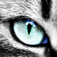 Cats Eye by MichaelHoey