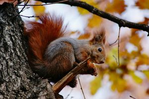 Squirrel II by ladyang