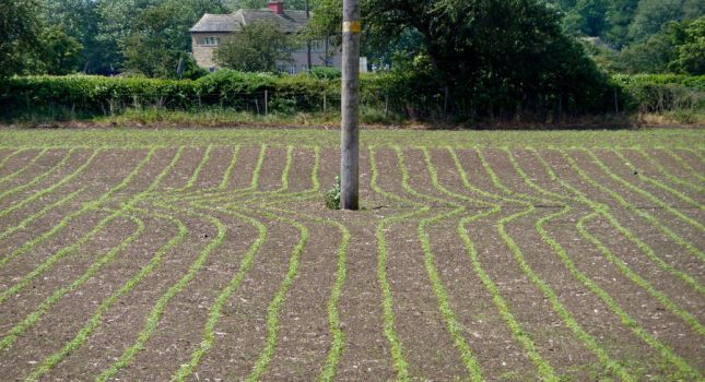 Sowing Patterns round the Pole by TDGreen