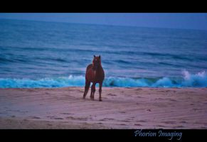 The lone horse at the beach by PhorionImaging