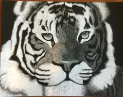 Scratchboard Tiger by SqueakyNoodle