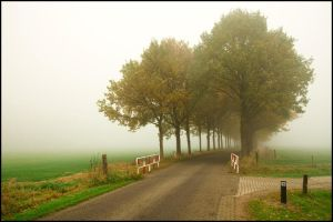 Foggy Trees by woopidoo2